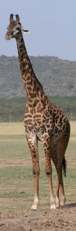 Click here to download wp_girafe.zip