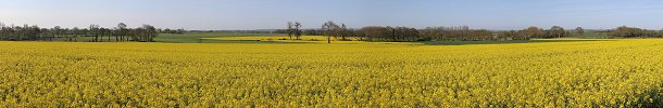 Click here to download wp_lespasrapeseedfield.zip